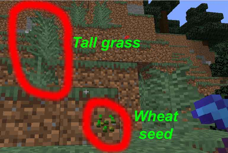 How can you make a wheat farm in Minecraft?