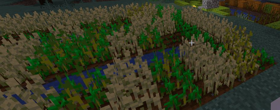 Photo of wheat farm in Minecraft